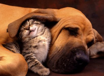 Cat & Dog Pic - funnycatpicture03