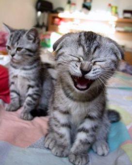 Cat Pic smiech